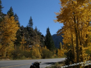 Woodfords area - the trees awash with the colors of autumn
