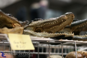 Gator Heads at the 2008 Easyriders Show in Sacramento (II)