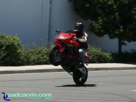 CBR954RR - Wheelie (I): This is a very clean 2002 Honda CBR954RR with stunt crash bars.
