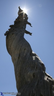 Twisted Tree Trunk Reaches For The Sky